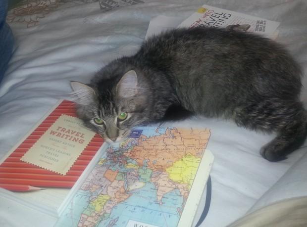 Oscar contemplating some reading