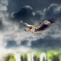 Eagle by Garry Benson