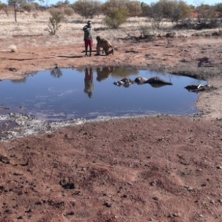 Impacts from feral camels