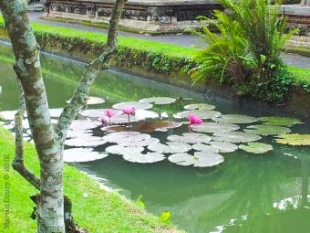 North Bali 2