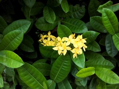 North Bali 3