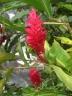 Samoa 3