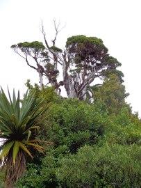 Taranaki vegitation. Martin Drury © 2013