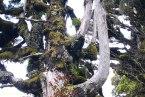 Amazing tree, Taranaki