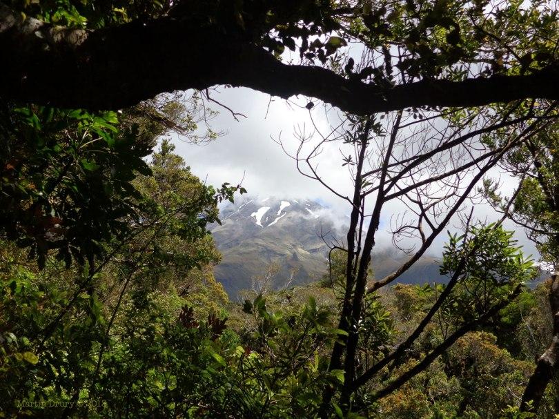 Taranaki through the trees.