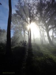 Canberra Mist 11