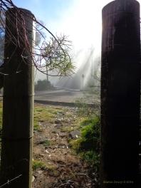 Canberra Mist 12