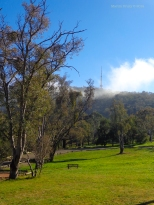 Canberra Mist 13