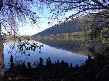 Canberra Mist 15