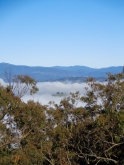 Canberra Mist 4