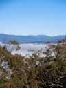 Canberra Mist 4