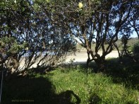 Emerald Beach 2