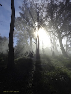 As the Fog Lifts on Canberra – A Photo Essay