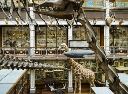 365 Places: Museum of Natural History, Dublin
