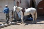 'Land of the Beautiful Horses,' Sevda posing, Akhal-Teke Ranch, 2008.