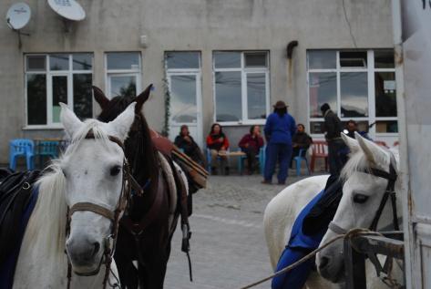 Tea-time in Kestel, while Ilos, Anadolu, Sarhoş turn their backs, 2009.