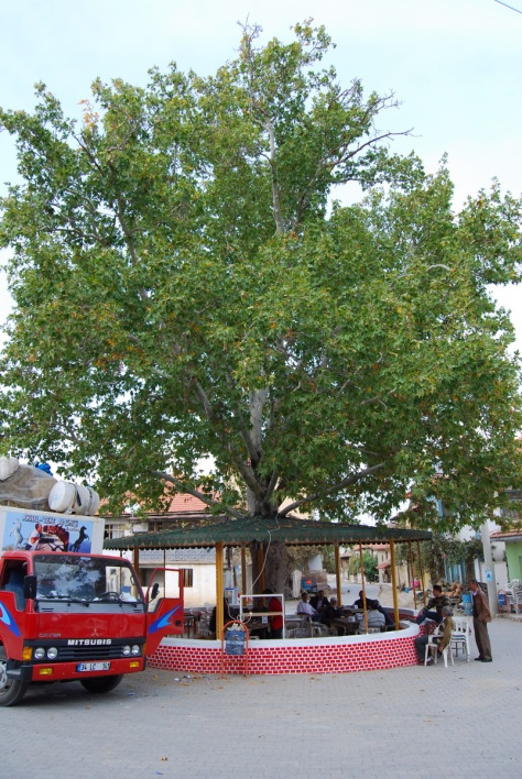 Magnificent plane tree hosting a tea house, Erdoğmuş, 2009.