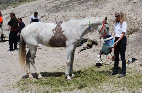 Zenopya and Donna,  Talas endurance trials