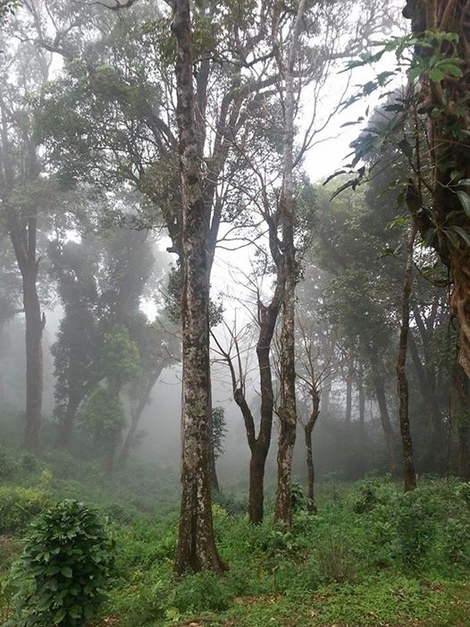 365 Places: Wayanad Forest