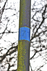 A blue lamppost has been covered in a community of green algae. Where a sticker has fallen away, the striking blue base paint is revealed, highlighting the photosynthetic microbial community.