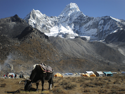 Ama Dablam Trek, Nepal – A Photo Essay